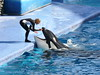 Orca Show Seaworld Florida by rolfspicture
