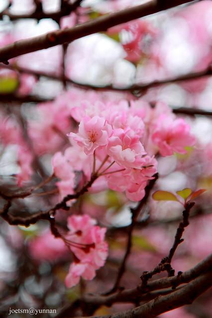 昆明圆通山动物园 | flickr