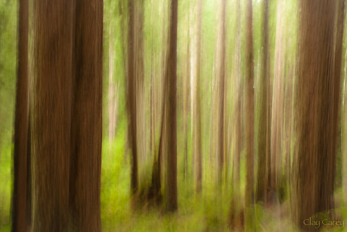 county abstract forest humboldt community sony redwood a200 arcata impressionist icm intentionalcameramovement