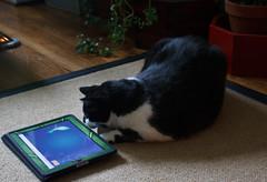 "Storm Plays ""Cat Fishing"""
