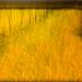 field by chrisfriel