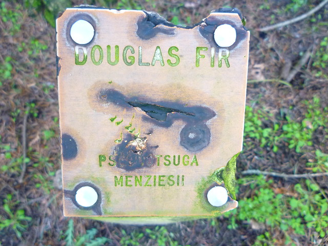 douglas fir sign