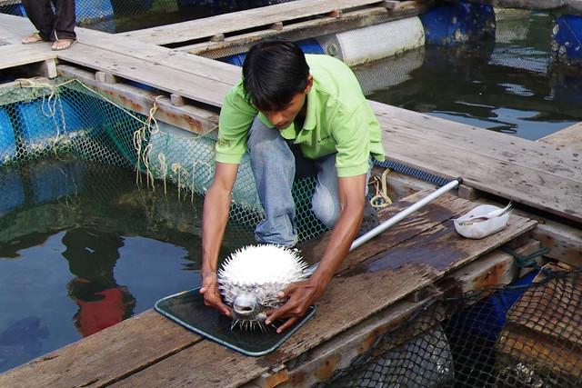 4352502654 fef9e673de for The fish whisperer