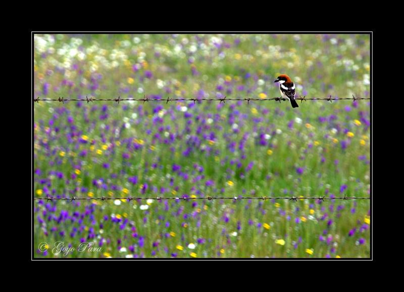 Cazadero primaveral