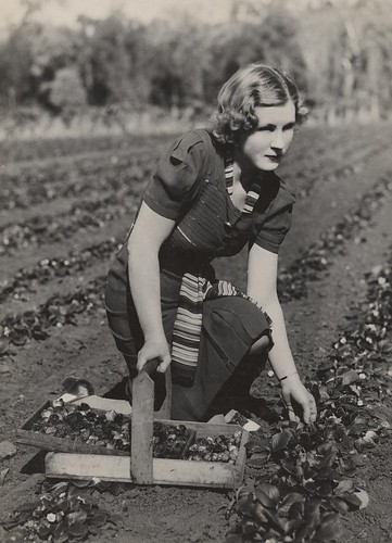 woman pose women basket strawberries queensland statelibraryofqueensland pickingstrawberries vintagehair redlandbay slq
