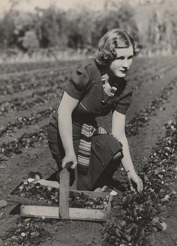 woman pose women basket strawberries queensland statelibraryofqueensland pickingstrawberries vintagehair redlandbay slq