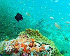 Zanzibar coral reef nature