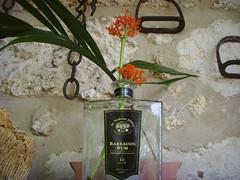 St Nicholas Abbey Rum
