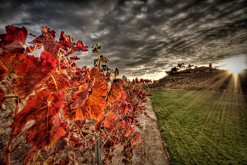 autumn friends sunset red sky color grass clouds photoshop landscape vineyard colorful wine socal grapes handheld hdr sigma1020mm 10mm photomatix tophdr canon40d hdraddicted joeercoli anvilimage