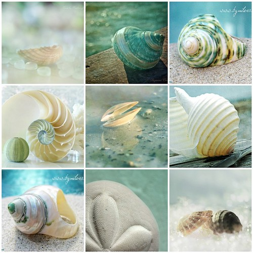 Favorite Sea Shell photos