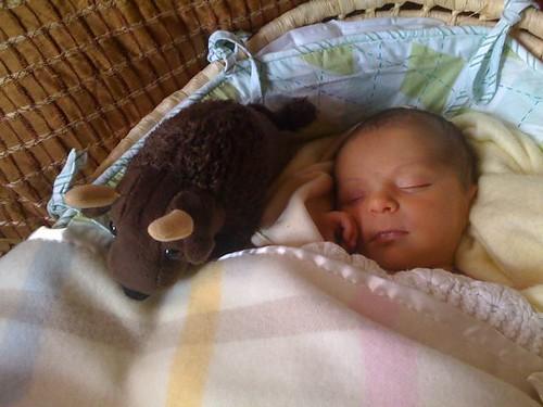 Buddy bison & Baby Sophia