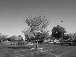 a tree in the parking lot 17