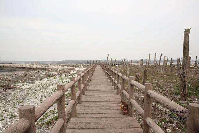 彰化福興-福寶濕地-漂流木公園 (5)