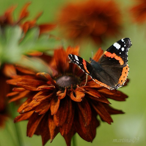 Perfect colour combination? or a red admiral trying to hide?