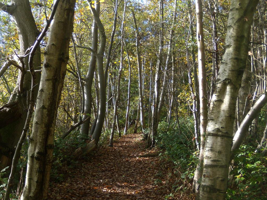 Birch avenue Sevenoaks Circular