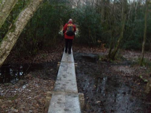 Walkin' the plank DSCN8335