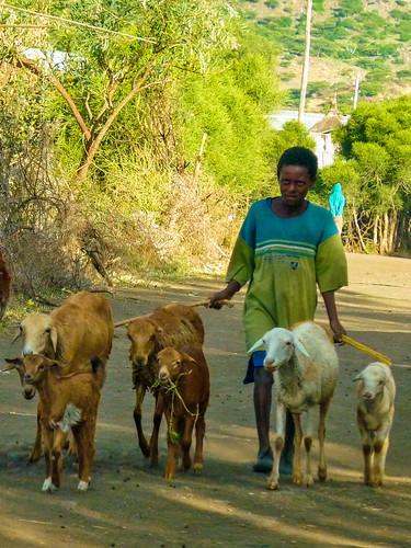 Traffic Jam, Lalibela, Ethiopia