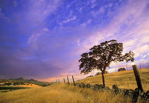 california county tree art landscape photography oak sutter northern buttes