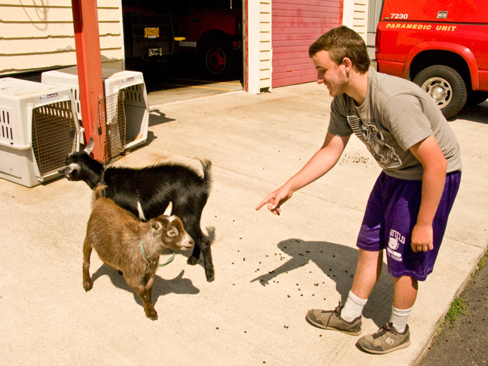 Yachats, Oregon Firehouse Goats