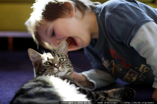 cat attacked by a vampire