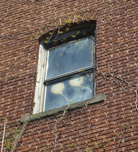 Balloons in Window