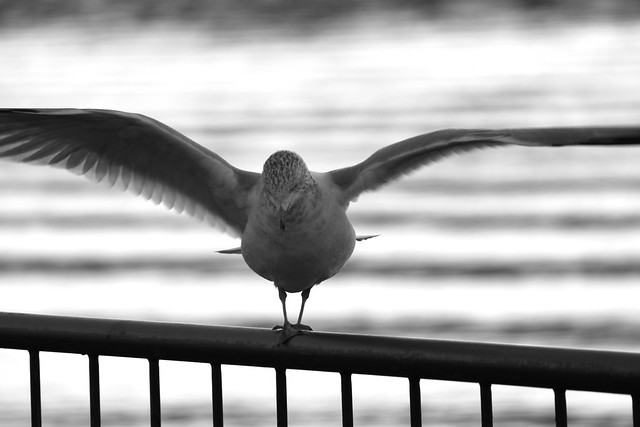 Seagull stretch
