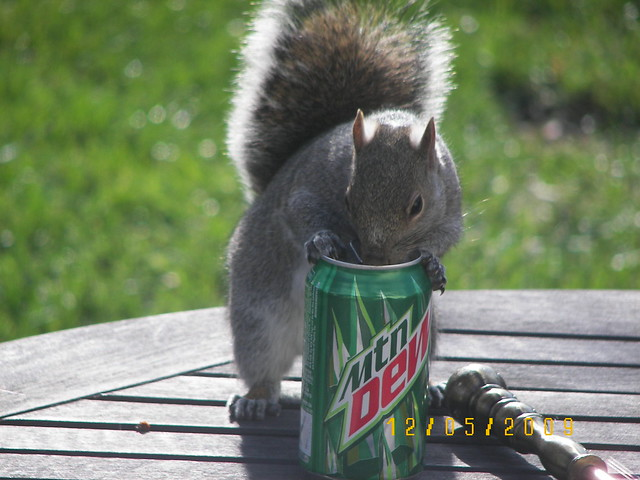 Our Squirrel Amp Mountain Dew Flickr Photo Sharing