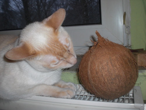 Coconut & Cat