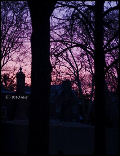 pink trees sunrise 50mm purple pennsylvania february viewfromourhouse canoneos50d
