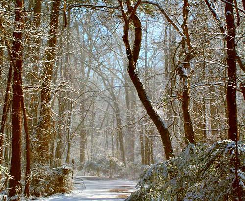 Snowy Path Deux