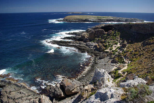 seal colony - Cape du Couedic