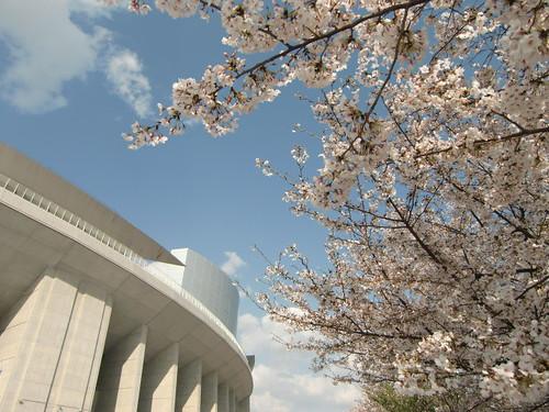 長居スタジアムと桜