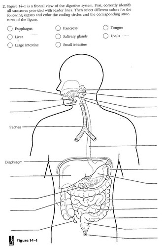 Flag Days  Digestive System Diagram Worksheet