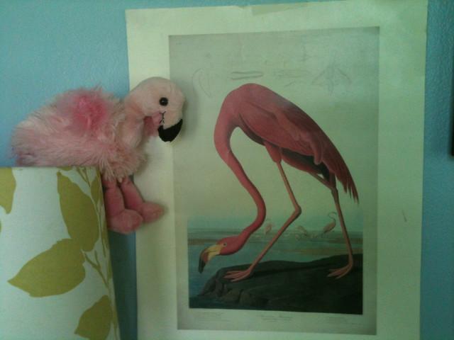 Flamingo Home Decor Flickr Photo Sharing