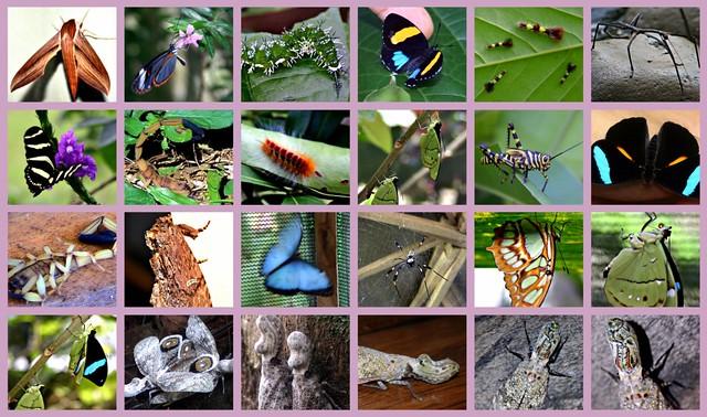 Costa Rica's Insects, Picnik collage | The strange Peanut ...