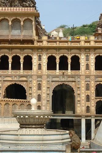 Templo de los monos de Jaipur Galwar Bagh, el templo de los Monos de Jaipur - 4171803153 5b5de1b81f - Galwar Bagh, el templo de los Monos de Jaipur