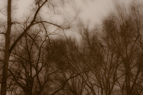 longexposure trees snow night 50mm availablelight