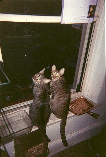Anna & Elvis at 112 Lafayette
