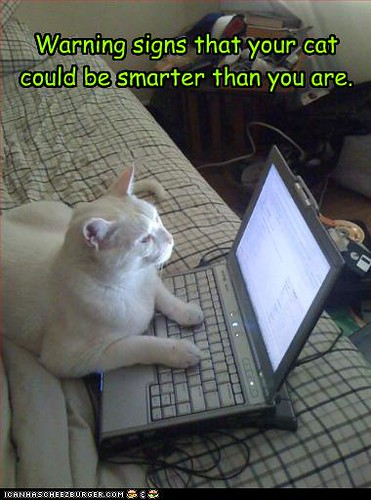 funny-pictures-your-cat-is-smart