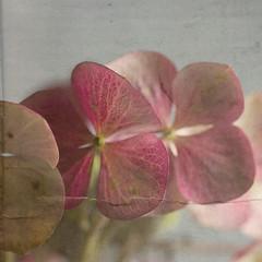 Blüten Blätter