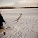 Jumping dog on frozen lake by Agent Angelo