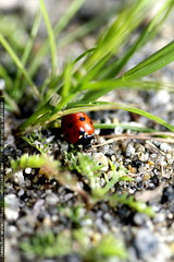 ladybug on the trail