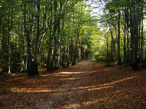 Forest on Monts de la Madeleine