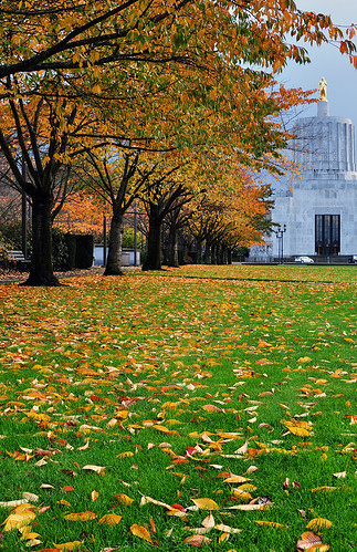 autumn fallleaves oregon fallcolors autumnleaves autumncolors pacificnorthwest salem marioncounty oregonstatecapitol