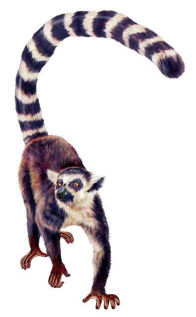 Lemur Ilustrao Realista Para Srie Zoboomafoo