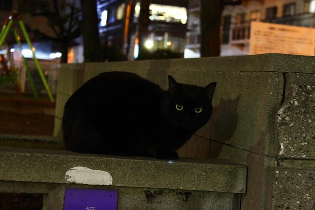 猫の目01