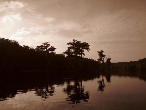 statepark trees sepia river florida wakullasprings edwardballwakullaspringsstatepark