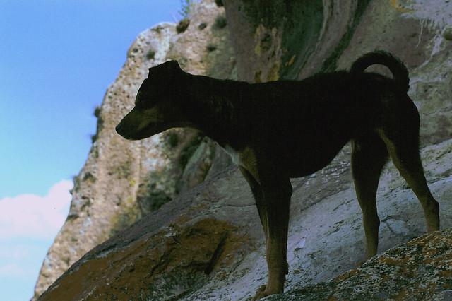 Negro en la Bufa; Guanajuato, Mexico (2002)