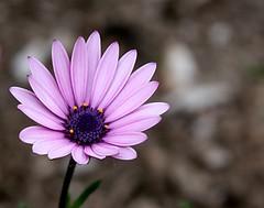 wild flowers...ephemeral beauty