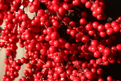 berry, red, plant, frutti di bosco, produce, fruit, food,